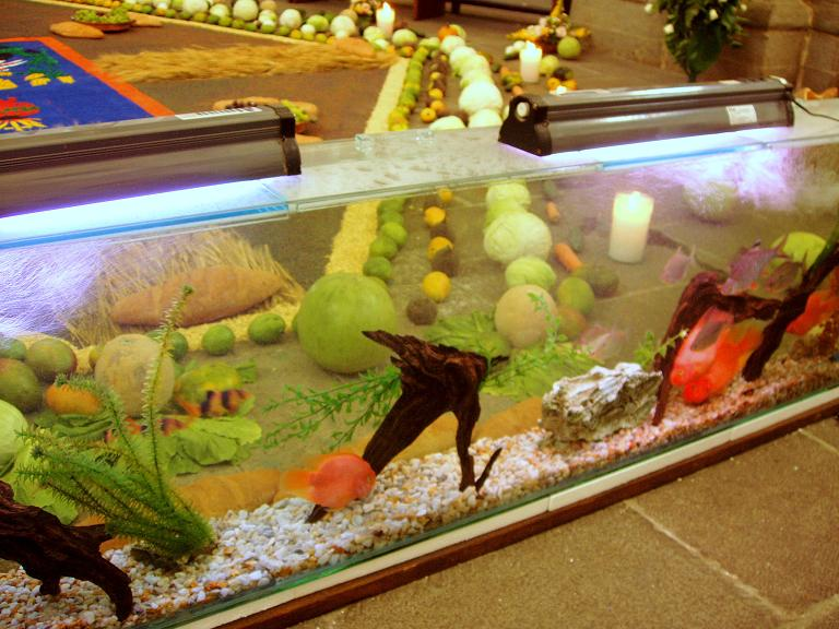 Eclesiastical fish tank