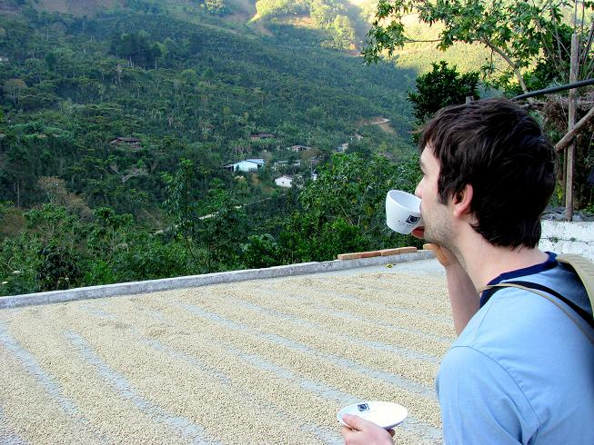 coffee, at the finca