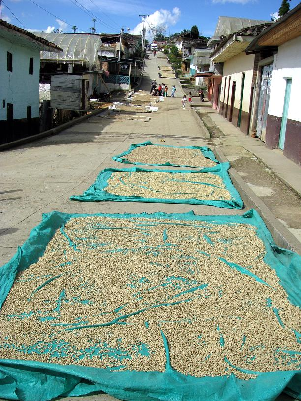 Coffee drying in parchment on the main street of Monserrate