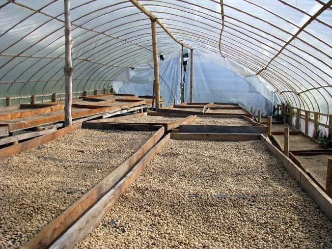 Parabolic sun drier with raised Kenya beds