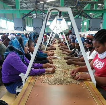 Behind the Bean: Ethiopia Yirgacheffe YIRGZ – Victrola Coffee Roasters